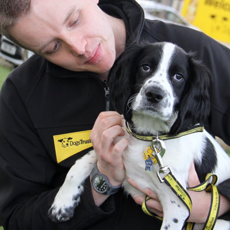 Dogs Trust - Dogs like Riley image