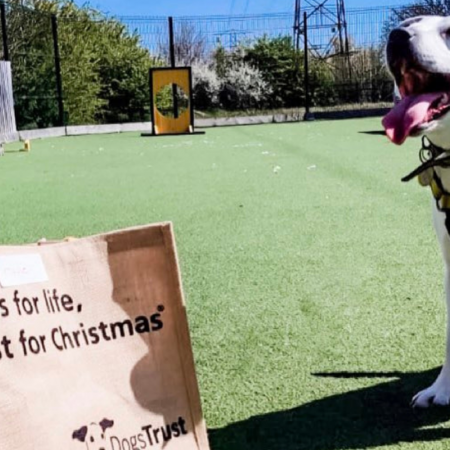 We are partnering with the wonderful charity, Dogs Trust image