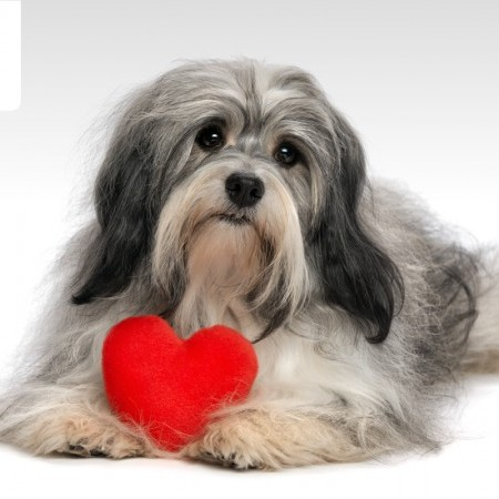 Puppy Love: Combat Pet Loneliness This Valentine's Day image