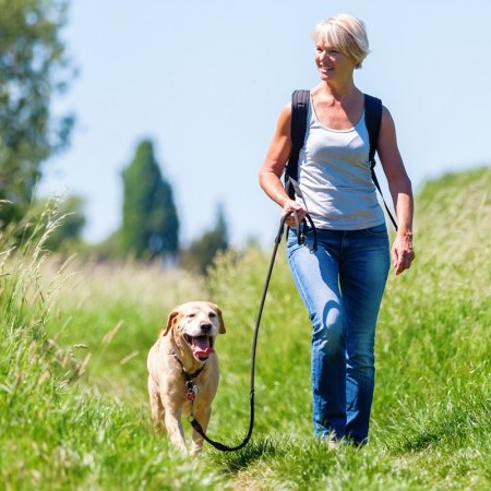 How to keep your dog safe in the summer sun image